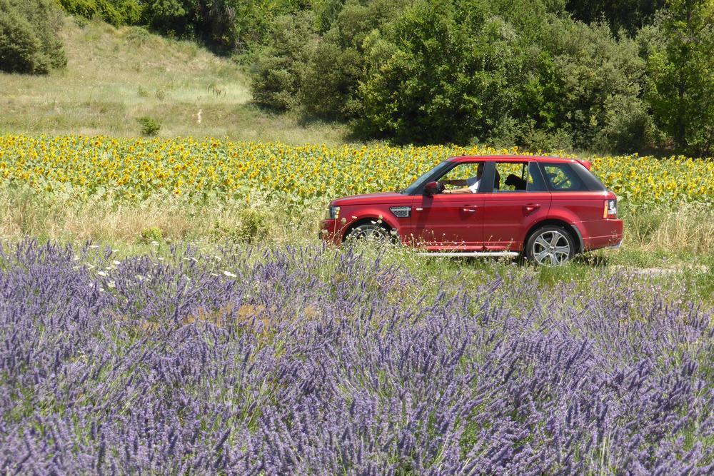 Lavendel-autopuzzelrit